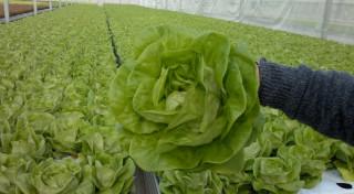 Afacerea cu salata care iti aduce venituri de milioane de lei