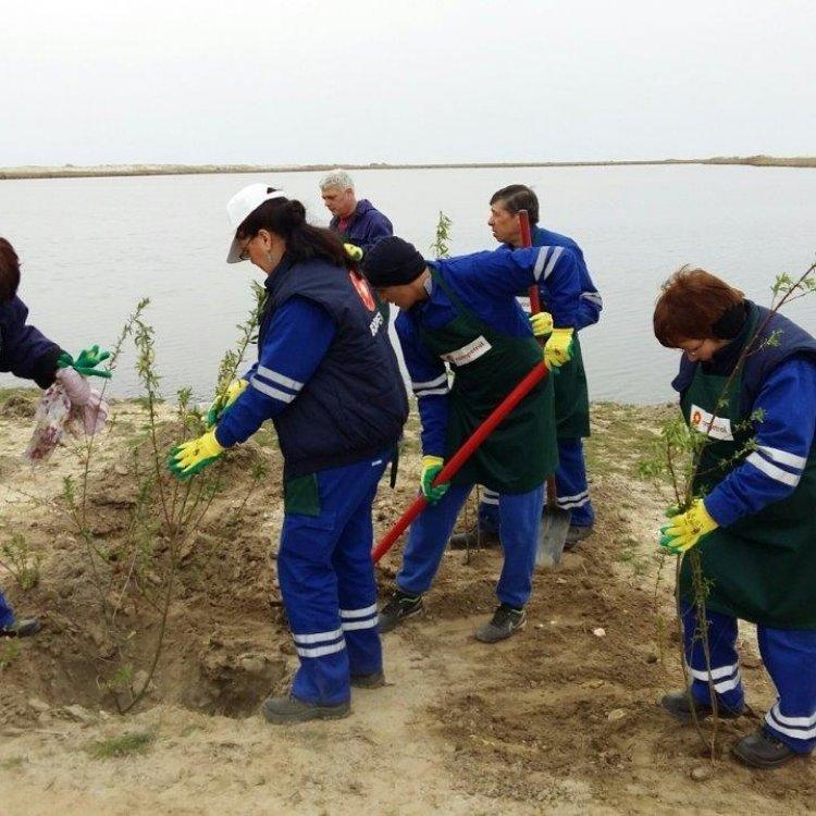 Voluntariat al angajatilor KMG International: 2200 de copaci plantati in judetul Constanta