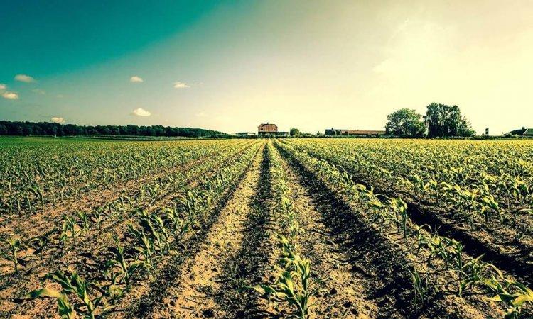 Pesticide-AZ.ro – Achizitioneaza o gama variata de fungicide care protejeaza plantele de diferite tipuri de boli