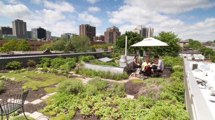 Acoperis verde un element inovativ - Odu Green Roof