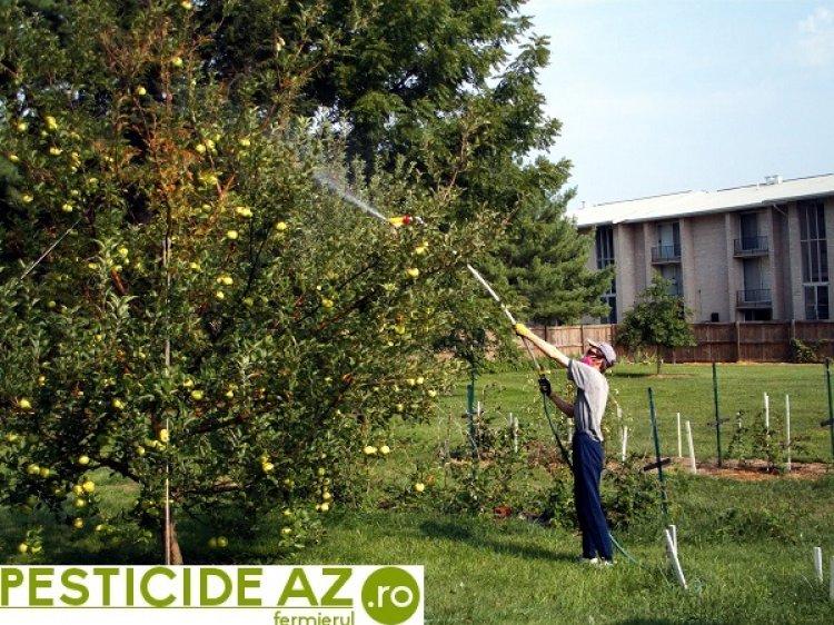 Sfaturi de ingrijire si stropire pomi fructiferi - Afla reteta unei recolte bogate