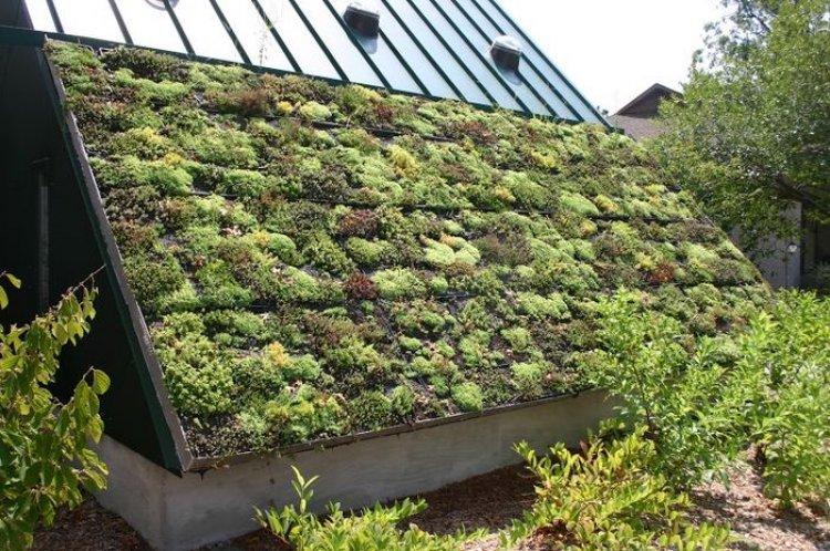 Acoperisuri verzi si peisagistica in inima orasului