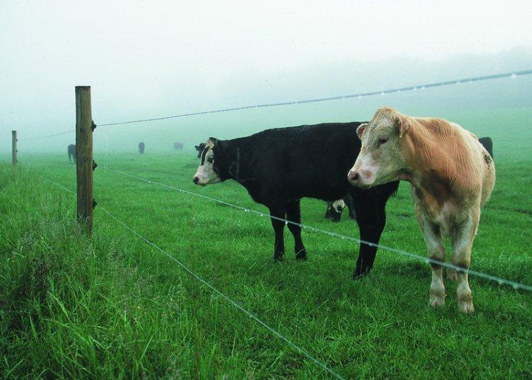 Gardul electric, metoda practica si accesibila de protectie pentru ferma ta