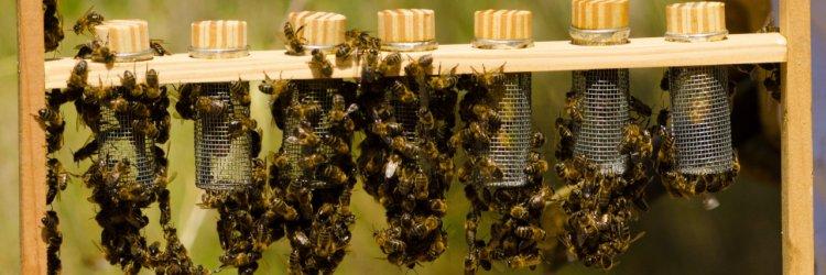 Cum sa ai grija de albinele tale iarna