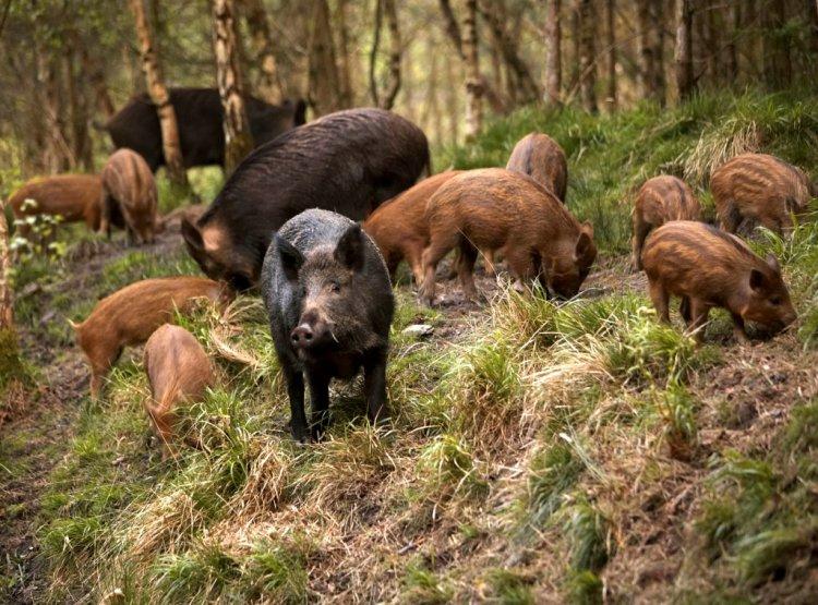 Cum poți speria animalele sălbatice pentru a-ți proteja culturile
