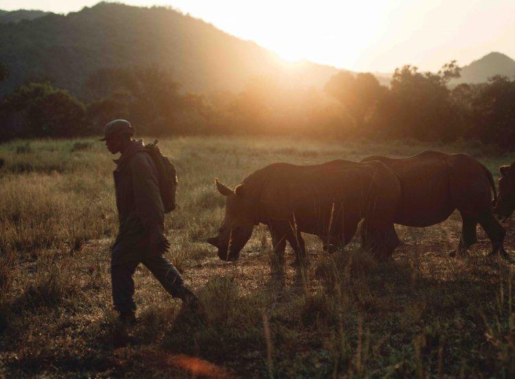 Maria Nilă sprijină rinocerii aflați în dificultate