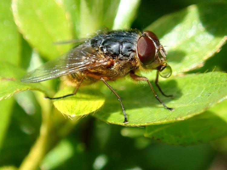 Care sunt cele mai periculoase insecte pentru sănătate?