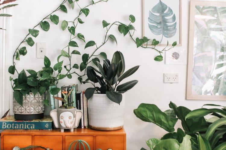 Cum să ai grijă de plantele din casă