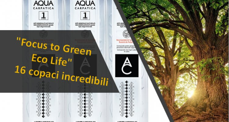 """""""Focus to Green Eco Life"""" – 16 copaci incredibili cu esenţe tǎmǎduitoare"""