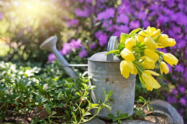 8 sfaturi utile pentru amenajarea și îngrijirea grădinii