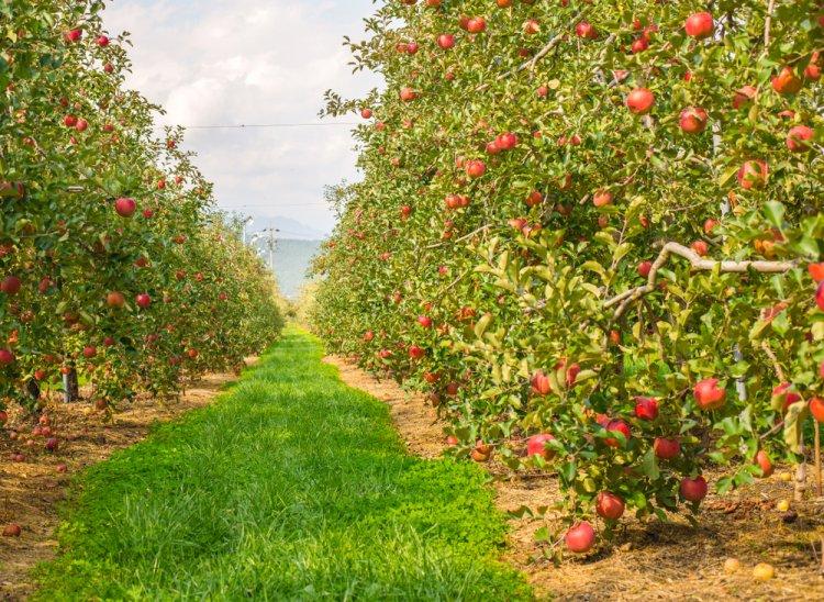 Afacere cu pomi fructiferi: 5 aspecte de care să ții cont