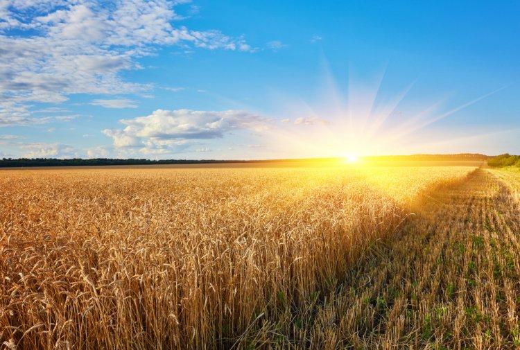 Criterii pentru alegerea aditivilor potriviți pentru culturile agricole